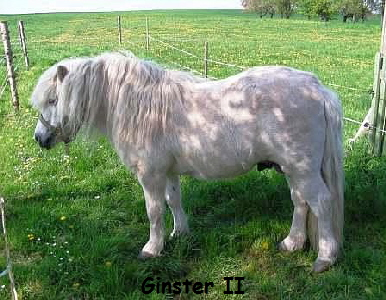 GinsterII